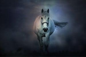 fantasy, horse, animals