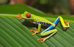 Amphibian Landing