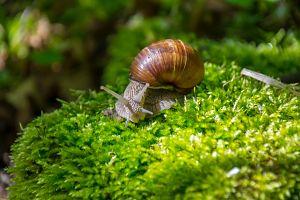 Mollusks Landing
