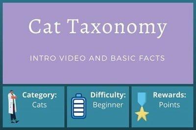 Cat Taxonomy