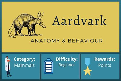 Aardvark Anatomy and Behaviour