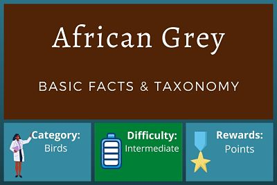 African Grey Facts and Taxonomy