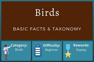 Bird Facts and Taxonomy