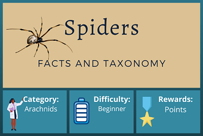 Spider facts and taxonomy