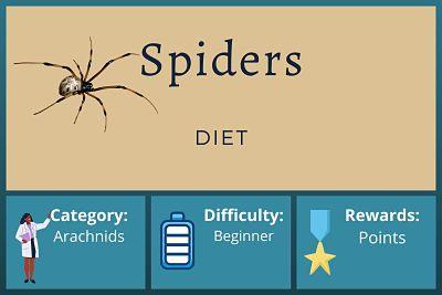 Spider Diet Course