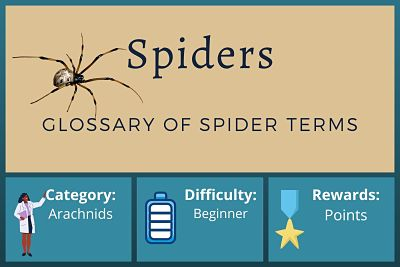 Glossary of Spider Terms Course