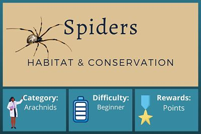 Spider Habitat and Conservation Course