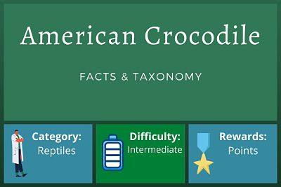 American Crocodile Facts and Taxonomy