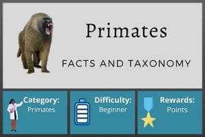 Primates Facts and Taxonomy Course
